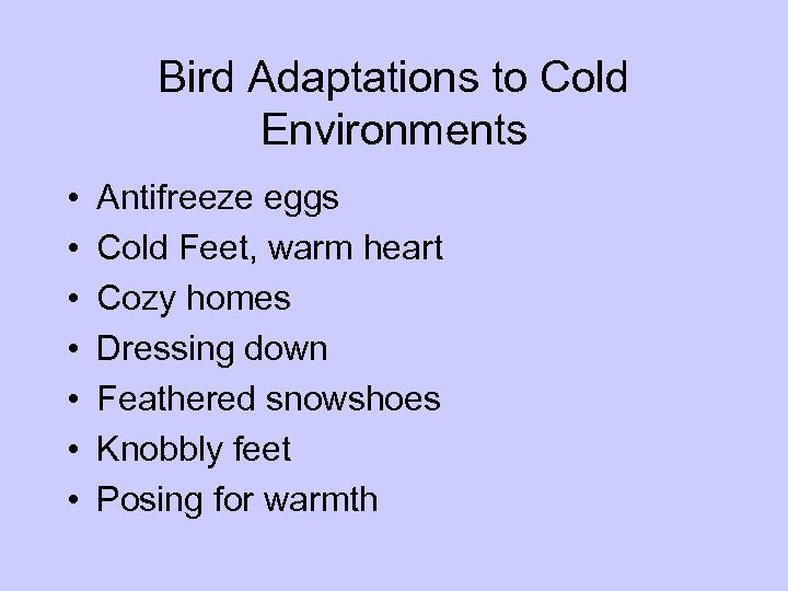 Bird Adaptations to Cold Environments • • Antifreeze eggs Cold Feet, warm heart Cozy