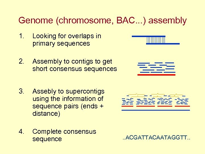 Genome (chromosome, BAC. . . ) assembly 1. Looking for overlaps in primary sequences