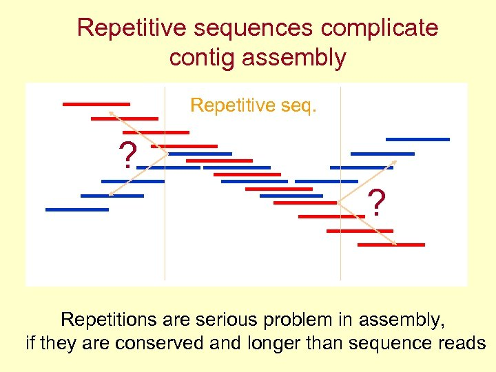 Repetitive sequences complicate contig assembly Repetitive seq. ? ? Repetitions are serious problem in