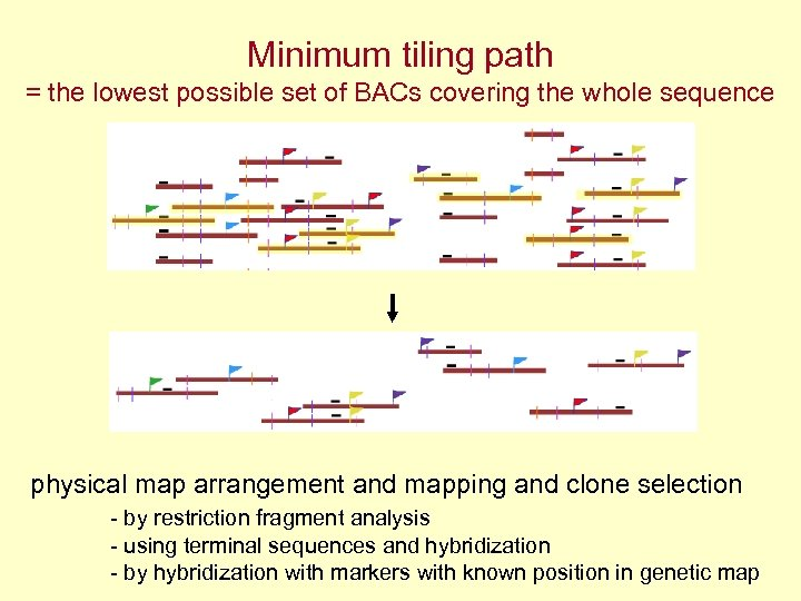 Minimum tiling path = the lowest possible set of BACs covering the whole sequence