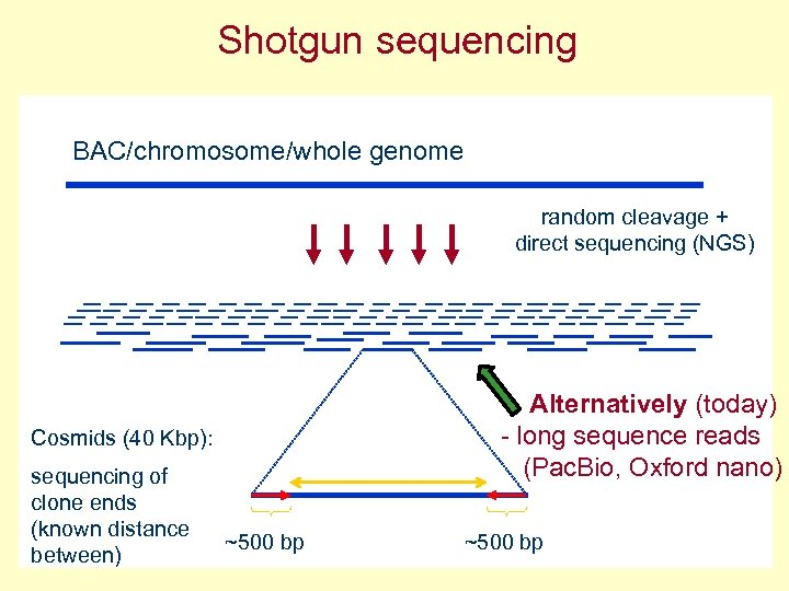 Shotgun sequencing BAC/chromosome/whole genome random cleavage + direct sequencing (NGS) Alternatively (today) - long