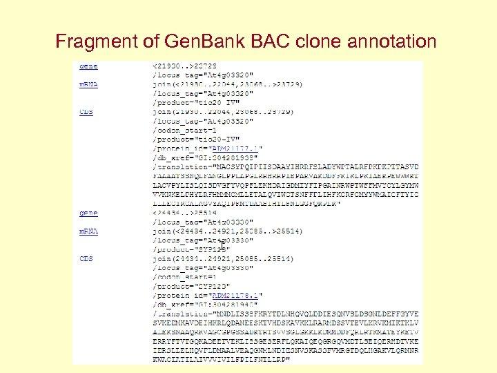 Fragment of Gen. Bank BAC clone annotation