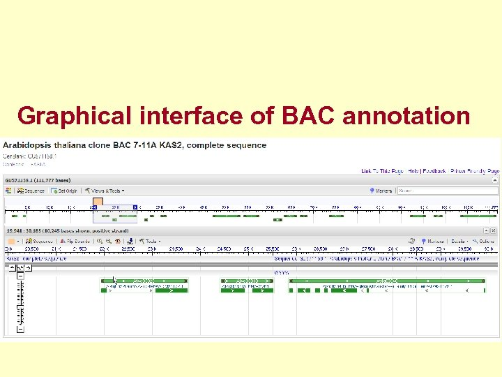Graphical interface of BAC annotation