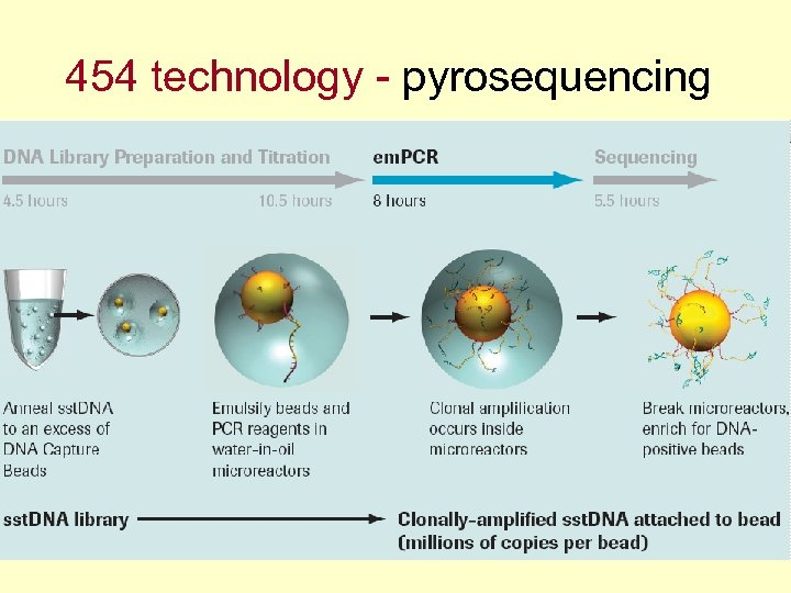 454 technology - pyrosequencing