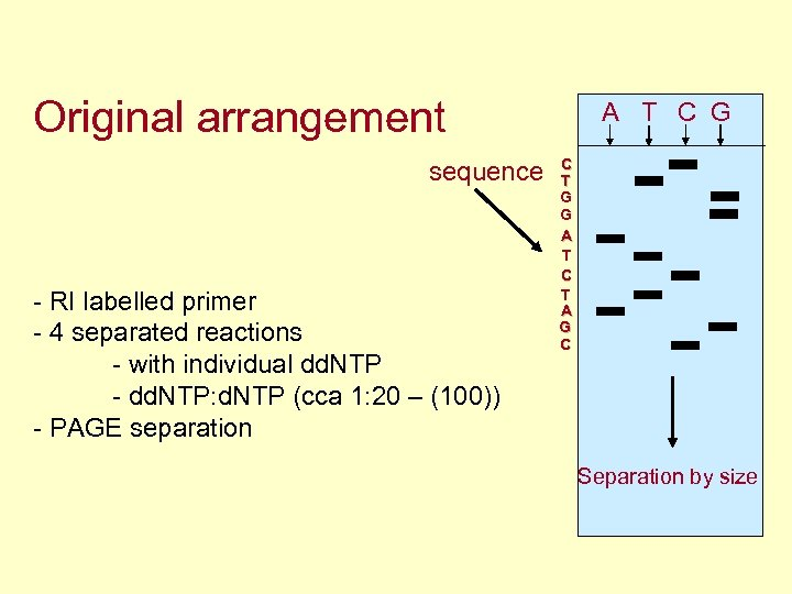 Original arrangement sequence - RI labelled primer - 4 separated reactions - with individual