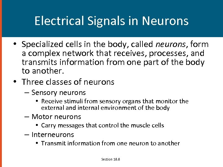 Electrical Signals in Neurons • Specialized cells in the body, called neurons, form a