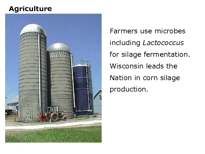 Agriculture Farmers use microbes including Lactococcus for silage fermentation. Wisconsin leads the Nation in