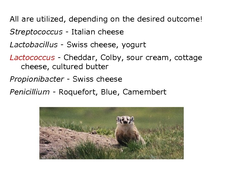 All are utilized, depending on the desired outcome! Streptococcus - Italian cheese Lactobacillus -