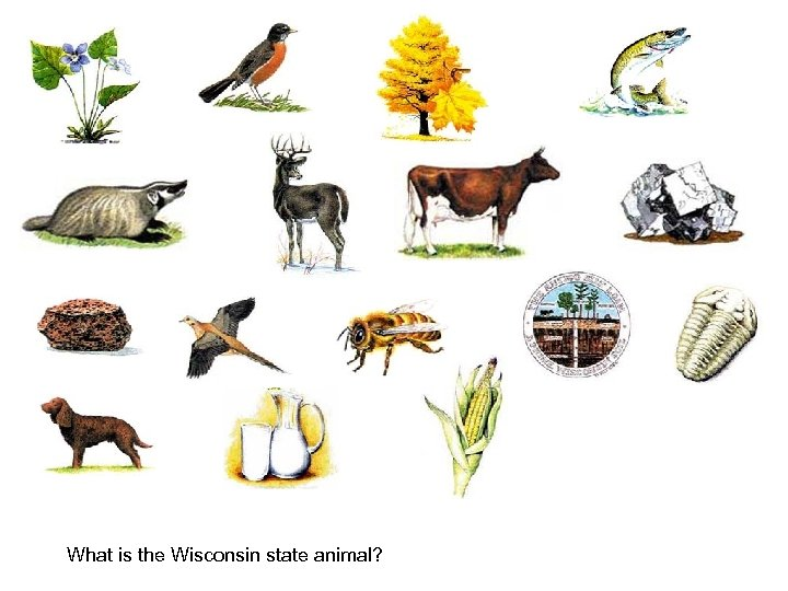 What is the Wisconsin state animal?