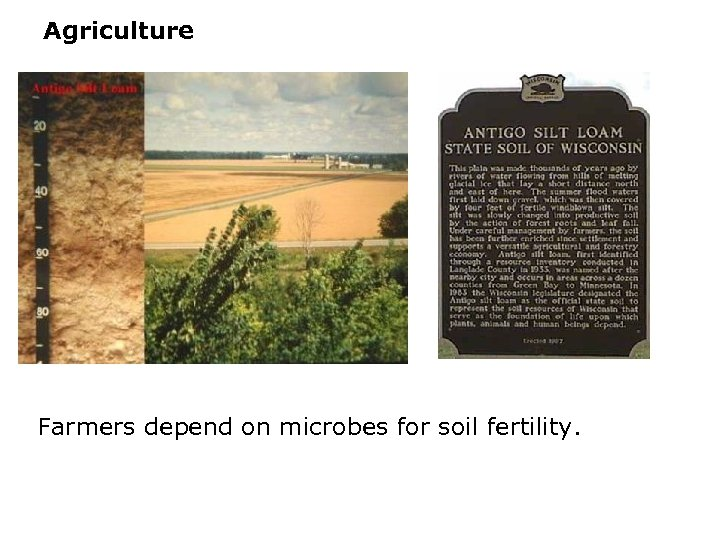 Agriculture Farmers depend on microbes for soil fertility.