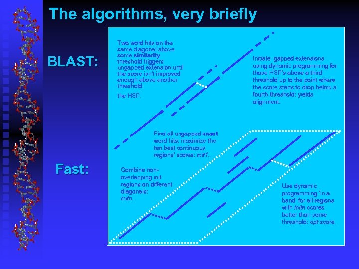 The algorithms, very briefly BLAST: Two word hits on the same diagonal above some