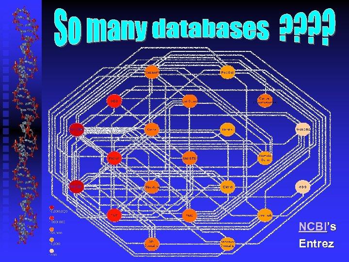 NCBI's Entrez