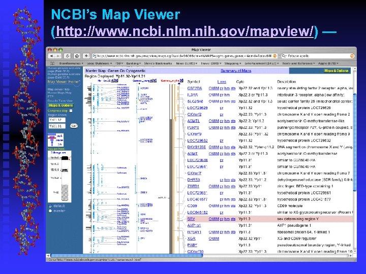 NCBI's Map Viewer (http: //www. ncbi. nlm. nih. gov/mapview/) —