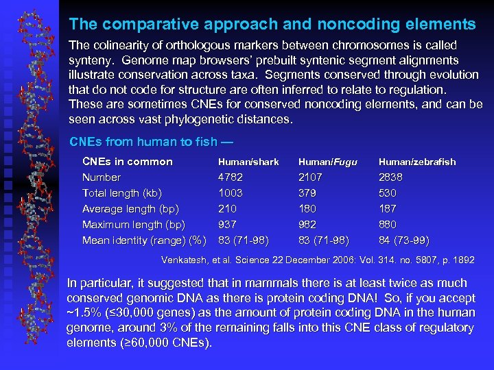 The comparative approach and noncoding elements The colinearity of orthologous markers between chromosomes is
