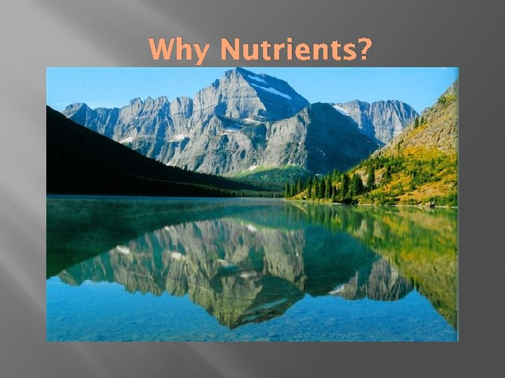 Why Nutrients?