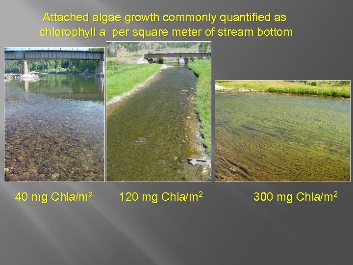 Attached algae growth commonly quantified as chlorophyll a per square meter of stream bottom