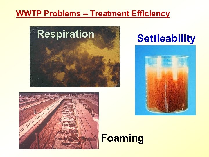 WWTP Problems – Treatment Efficiency Respiration Settleability Foaming