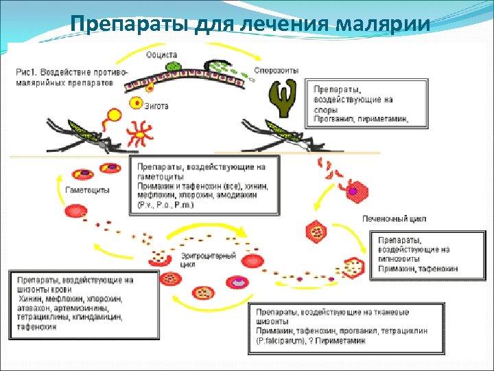 Препараты для лечения малярии