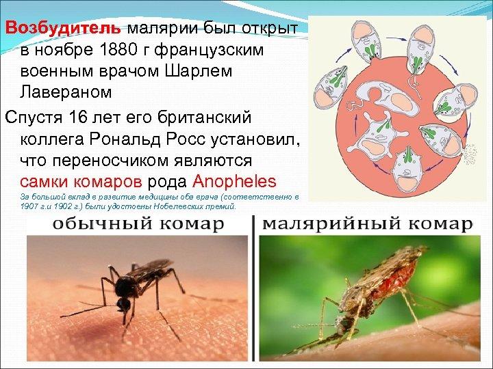 Возбудитель малярии был открыт в ноябре 1880 г французским военным врачом Шарлем Лавераном Спустя