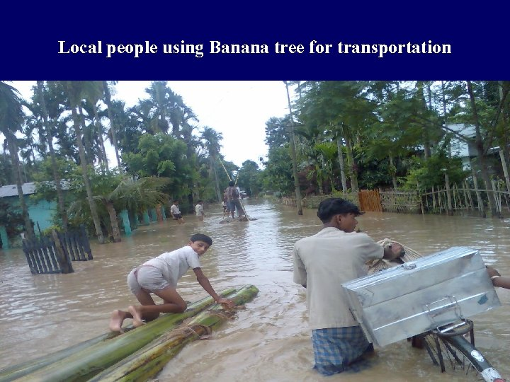Local people using Banana tree for transportation