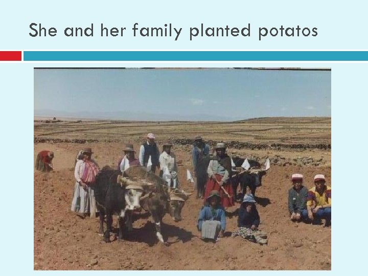She and her family planted potatos