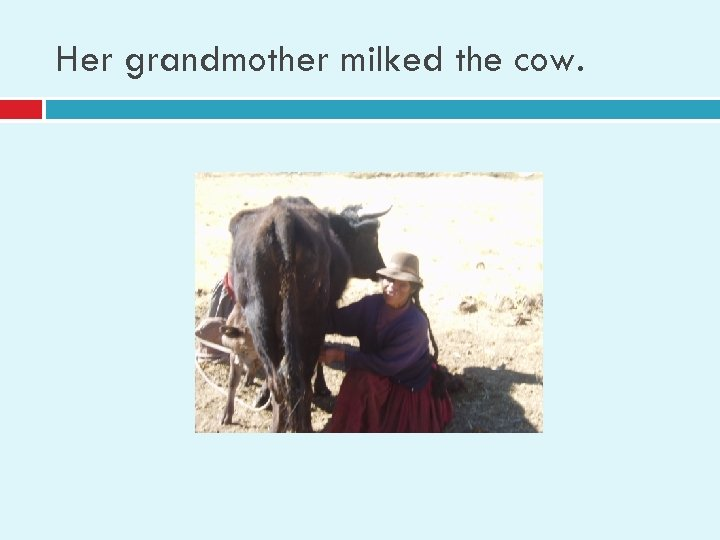 Her grandmother milked the cow.