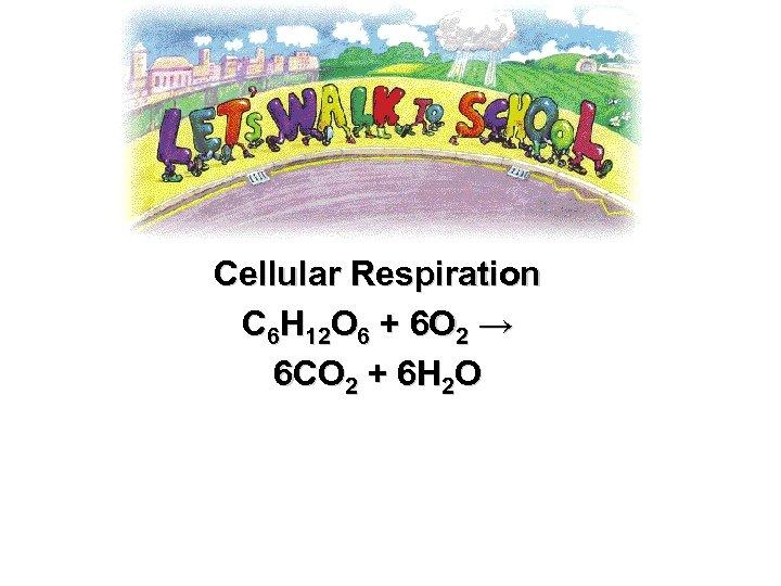 Cellular Respiration C 6 H 12 O 6 + 6 O 2 → 6