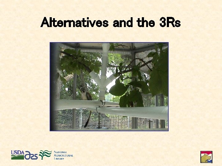 Alternatives and the 3 Rs