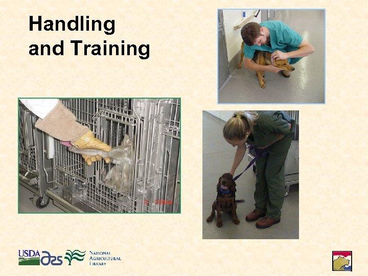 Handling and Training