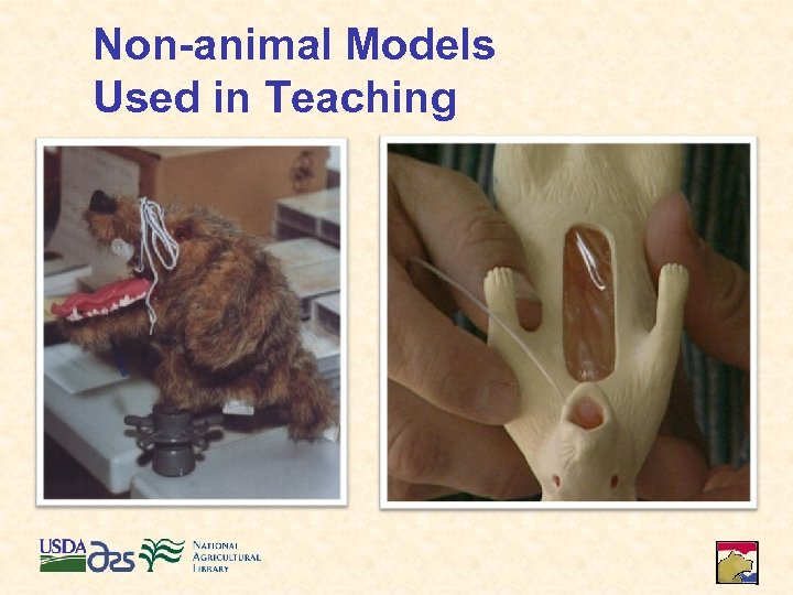 Non-animal Models Used in Teaching