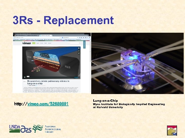 3 Rs - Replacement http: //vimeo. com/52689891 Lung-on-a-Chip Wyss Institute for Biologically Inspired Engineering