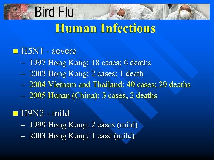 Human Infections n H 5 N 1 - severe – – n 1997 Hong