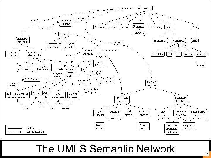 The UMLS Semantic Network 51