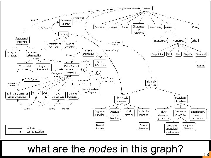 what are the nodes in this graph? 58