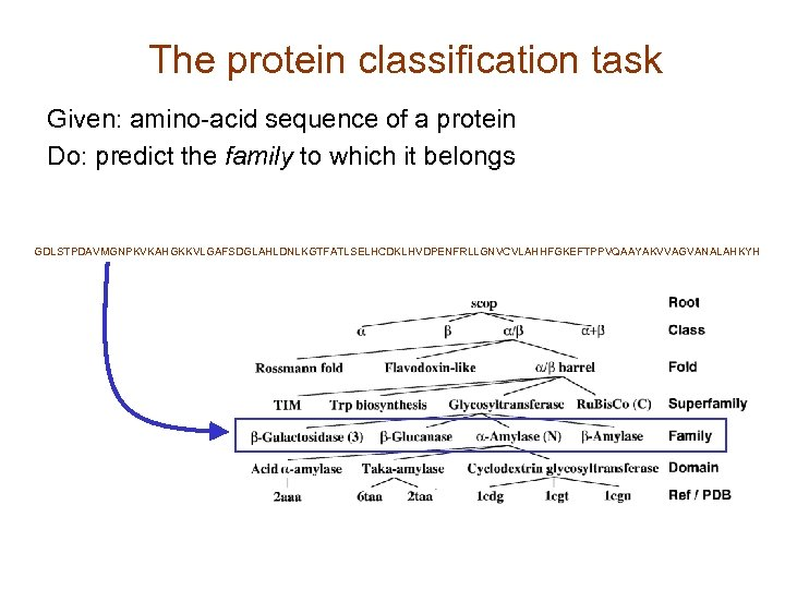 The protein classification task Given: amino-acid sequence of a protein Do: predict the family