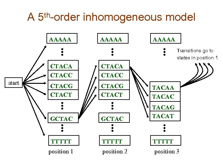 A 5 th-order inhomogeneous model AAAAA Transitions go to states in position 1 CTACA