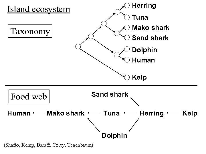 Herring Island ecosystem Tuna Mako shark Sand shark Taxonomy Dolphin Human Kelp Food web