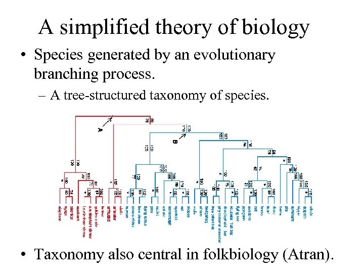 A simplified theory of biology • Species generated by an evolutionary branching process. –