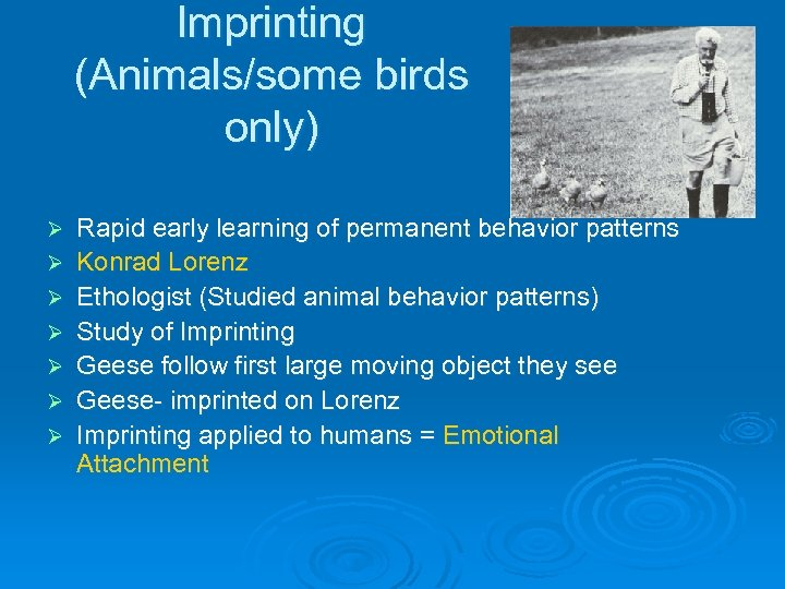Imprinting (Animals/some birds only) Ø Ø Ø Ø Rapid early learning of permanent behavior