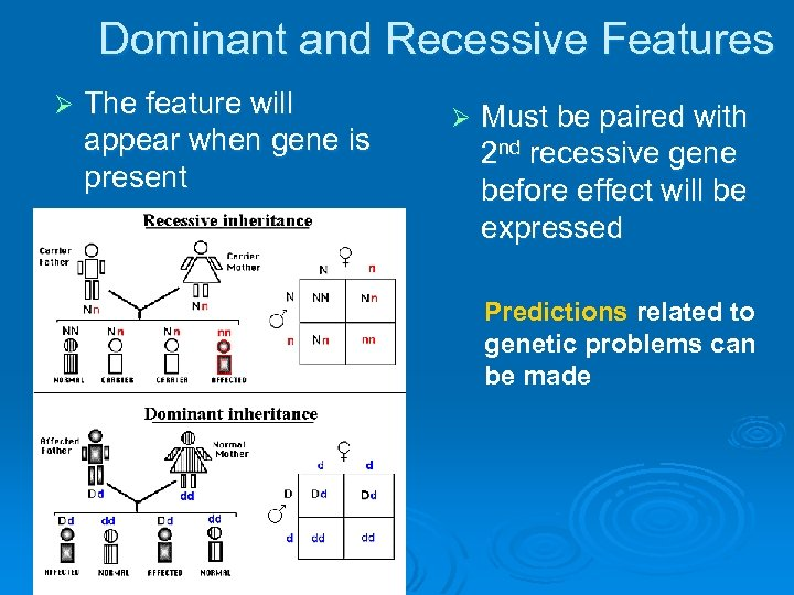 Dominant and Recessive Features Ø The feature will appear when gene is present Ø