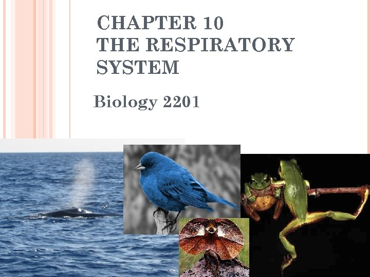 CHAPTER 10 THE RESPIRATORY SYSTEM Biology 2201