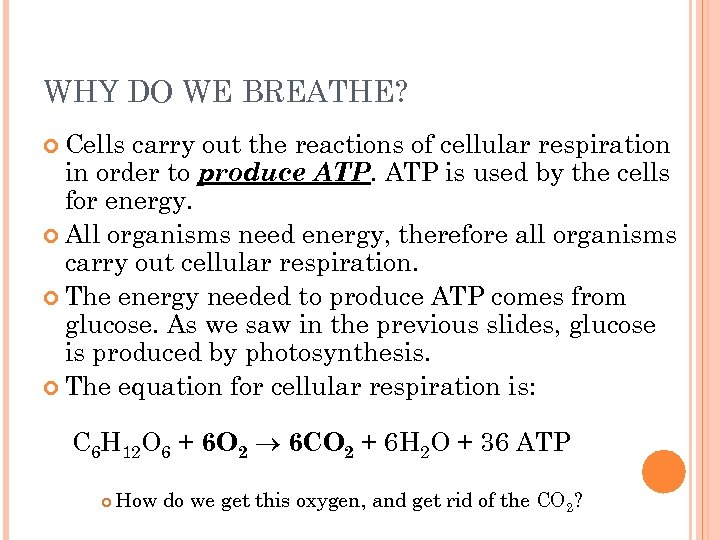 WHY DO WE BREATHE? Cells carry out the reactions of cellular respiration in order