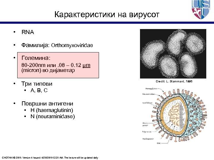 Карактеристики на вирусот • RNA • Фамилија: Orthomyxoviridae • Големина: 80 -200 nm или.