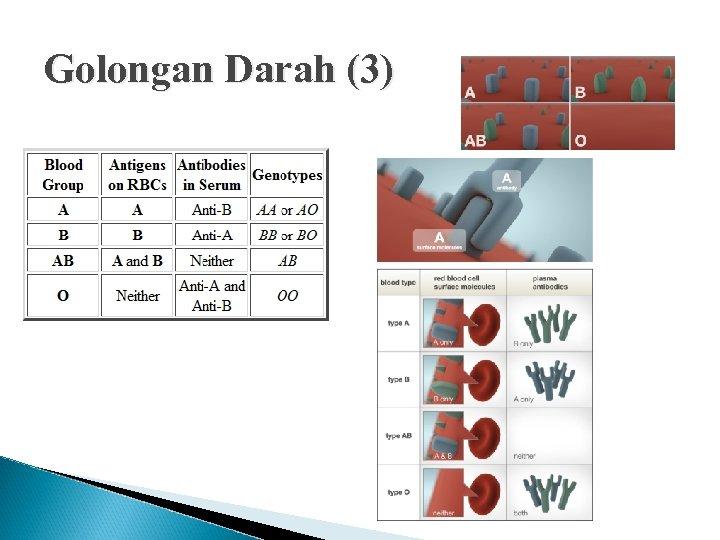 Golongan Darah (3)