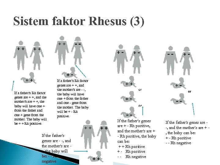 Sistem faktor Rhesus (3) If a father's Rh factor genes are + +, and