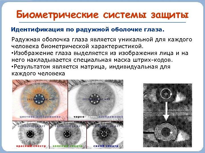 Биометрические системы защиты Идентификация по радужной оболочке глаза. Радужная оболочка глаза является уникальной для