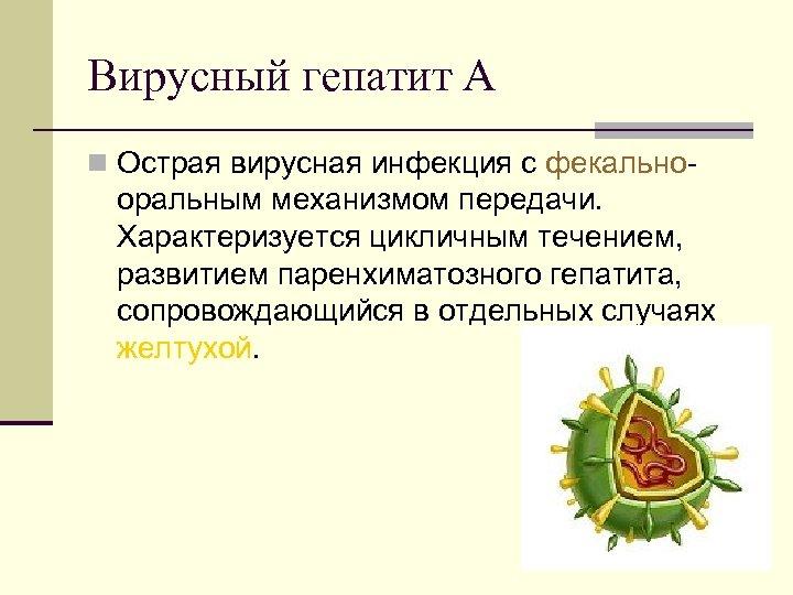 Вирусный гепатит А n Острая вирусная инфекция с фекально оральным механизмом передачи. Характеризуется цикличным