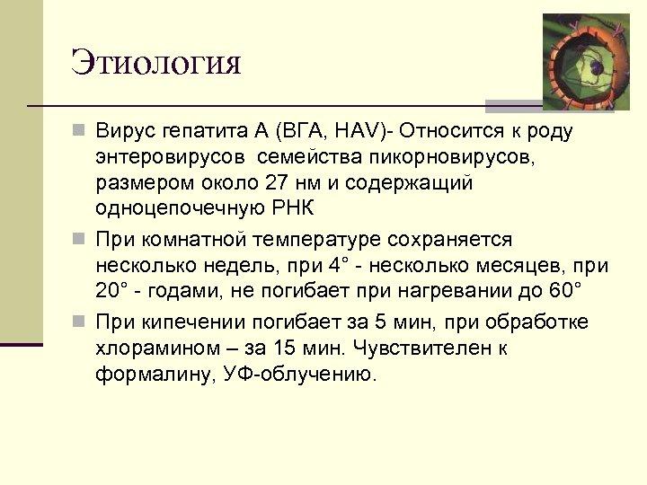 Этиология n Вирус гепатита А (ВГА, HAV) Относится к роду энтеровирусов семейства пикорновирусов, размером