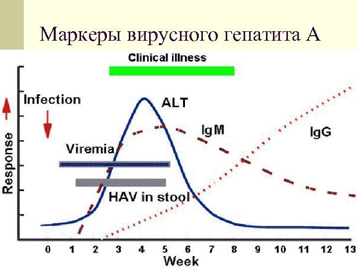 Маркеры вирусного гепатита А
