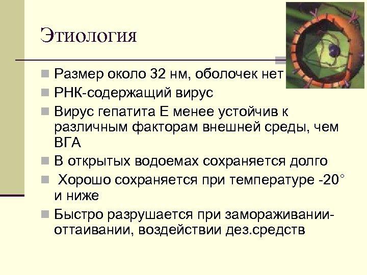 Этиология n Размер около 32 нм, оболочек нет n РНК содержащий вирус n Вирус